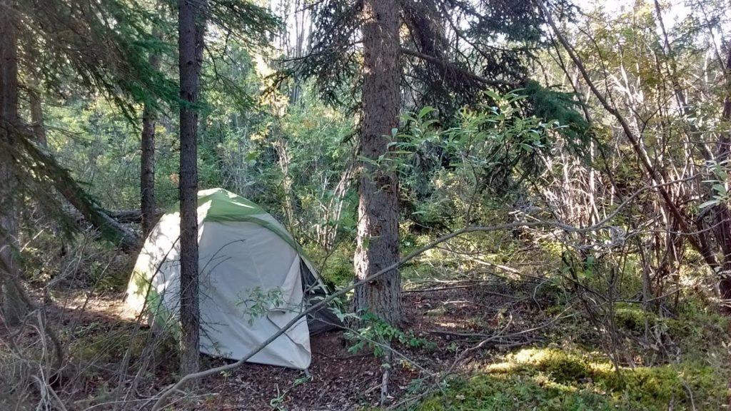 一邊搭便車一邊露營一邊遠距工作 camping in the wild in canada