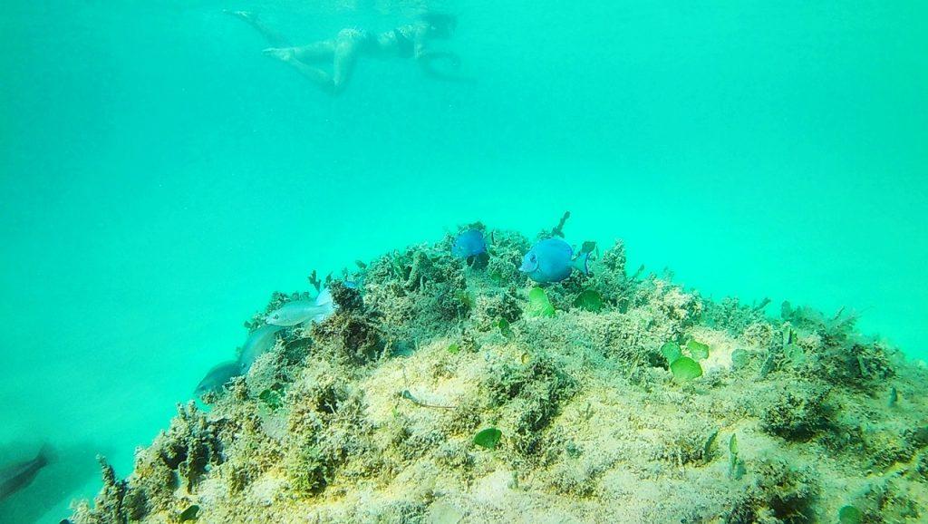 多明尼加共和國Super Mei 面對在深海游泳的勇氣克服恐懼自由浮潛